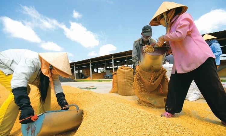 Bộ Công Thương đề xuất xuất khẩu 400.000 tấn gạo trong tháng 4/2020