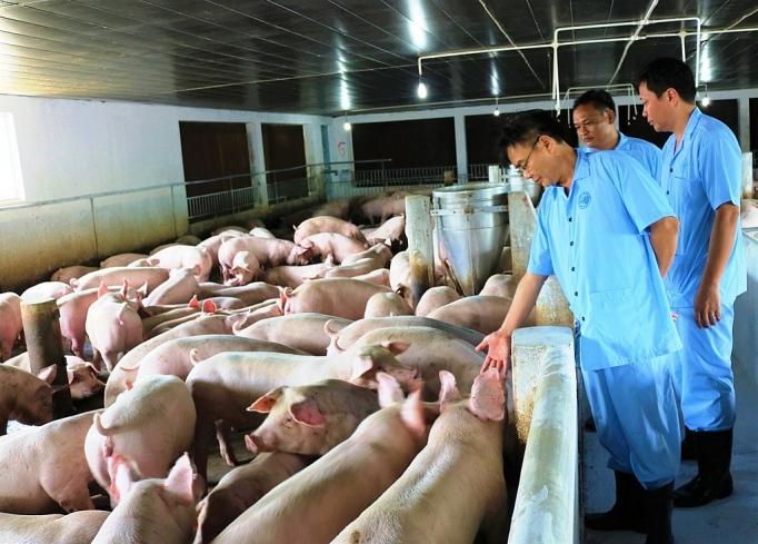 Bộ Công Thương khuyến cáo người tiêu dùng không nên hoang mang trong sử dụng thịt lợn