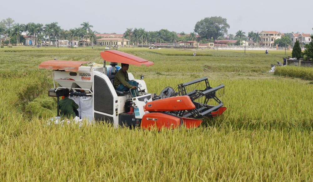 Dự án cải tạo đất ngành nông lâm nghiệp