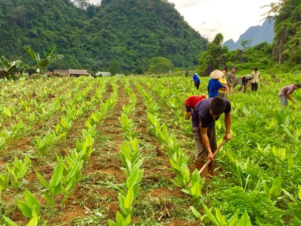 Dự án ngành nông lâm nghiệp